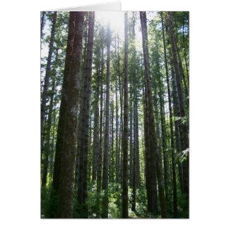 Forêt d'île de Vancover Carte