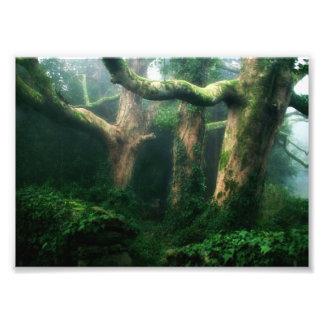 Forêt verdoyante impression photo