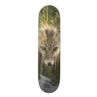 Fox rouge, fulva de Vulpes sur le rondin, fleurs Skateboard Customisable