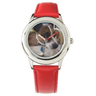 Fox Terrier, attraction, montre en cuir rouge