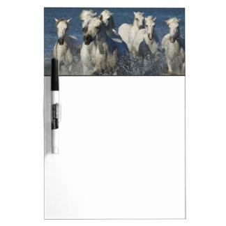 Frankrijk, Camargue. Paarden estuarium 4 worden do Whiteboard