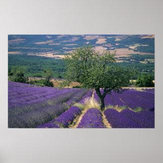 Frankrijk, PACA, Alpes DE Haute Provence, 3 Poster