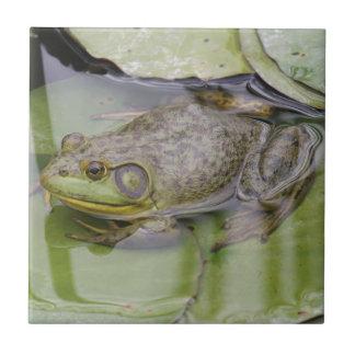 Froggy Petit Carreau Carré