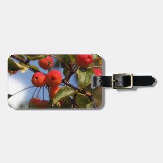 Fruits d'un pommier sauvage étiquette à bagage