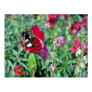 Gaffez l'abeille/carte postale de muflier carte postale