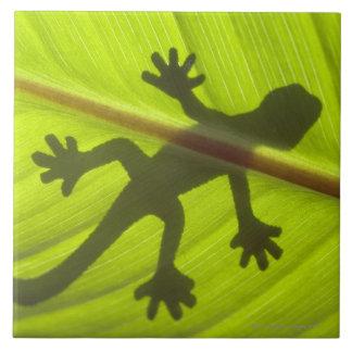 Gecko Grand Carreau Carré