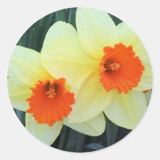 Gele en Oranje Gele narcissen Ronde Sticker
