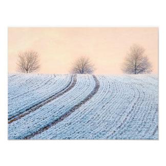Gelée pittoresque Paperprint d'arbres de paysage Impression Photo
