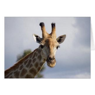 Girafe au Botswana, Afrique, carte de voeux