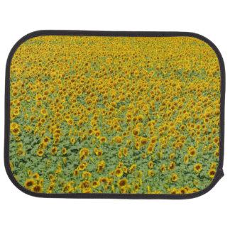 Gisement jaune de tournesol tapis de sol