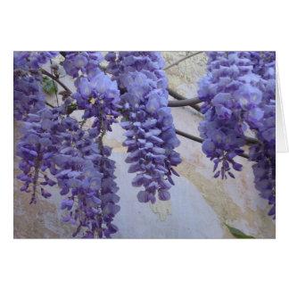 Glycines en Provence Carte