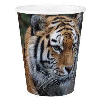 Gobelets En Papier Tigre