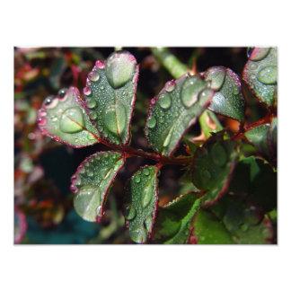 Gouttes de pluie sur le feuille rose d'arbre impression photo