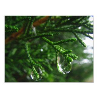 Gouttes de pluie sur une branche d'arbre impression photo