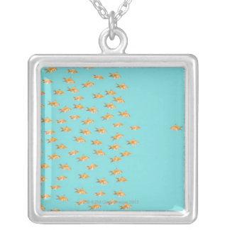 Grand groupe du poisson rouge faisant face à un collier