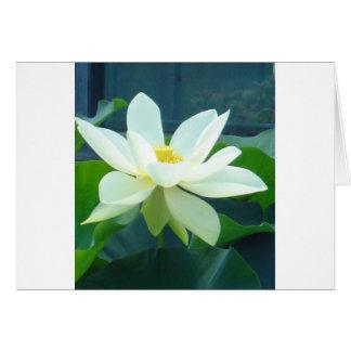 grand lis blanc carte de vœux