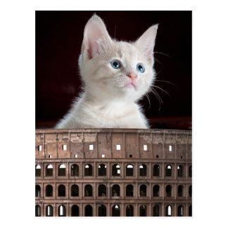 Grand minou blanc de Colosseum Carte Postale