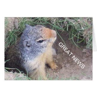Grande carte de nouvelles de Groundhog