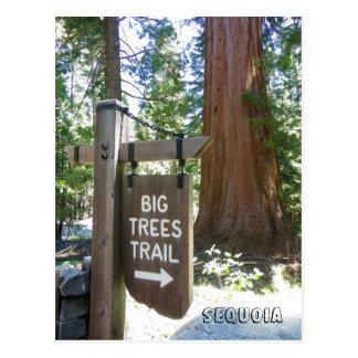 Grande carte postale de traînée d'arbres de