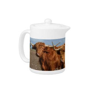 Grandes vaches des montagnes à Brown,