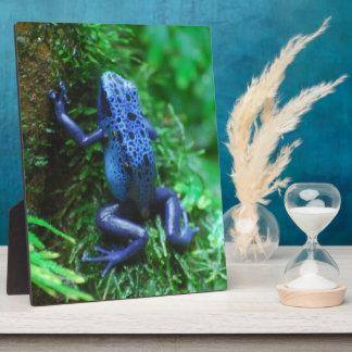 Grenouille bleue de flèche de poison plaque d'affichage