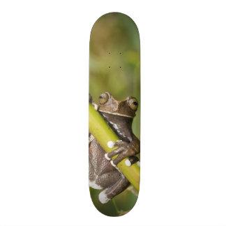 Grenouille d'arbre captive de Tapichalaca Skateboard