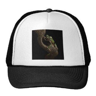 grenouille d'arbre tropicale casquette trucker