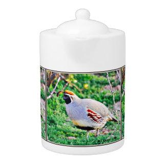 Gros pot de thé de colombe de Sonoran