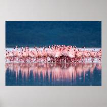 Grote Groep Kleinere Flamingo's Poster