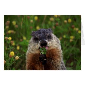 Groundhog peut goûter la carte de ressort