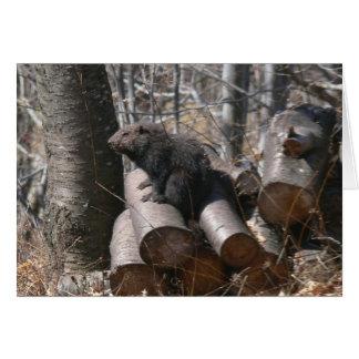 Groundhog sur la carte de tas de bois