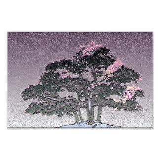 Groupe d'arbres de bonsaïs dans le pourpre impression photo