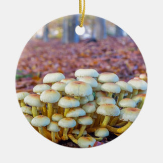 Groupe de champignons dans la forêt de hêtre de ornement rond en céramique