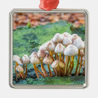 Groupe de champignons sur le tronçon d'arbre vert ornement carré argenté
