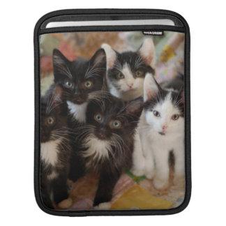 Groupe de chaton de smoking poche iPad