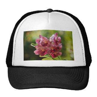 Groupe tropical d'orchidée de Vanda Casquette