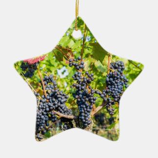 Groupes bleus accrochants de raisin dans le ornement étoile en céramique