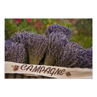 Groupes de lavande à vendre, Vence, Provence,
