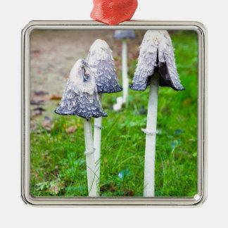 Groupez les champignons d'encre près du chemin ornement carré argenté