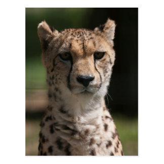 guépard dans la jungle carte postale