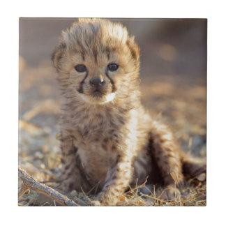 Guépard petit animal masculin âgé de 19 jours petit carreau carré