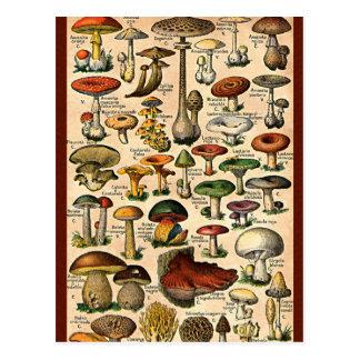 Guide vintage de champignon cartes postales