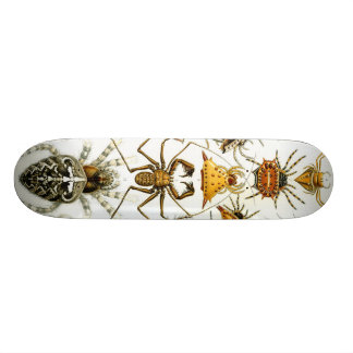 Haeckel_Arachnida Plateau De Skateboard