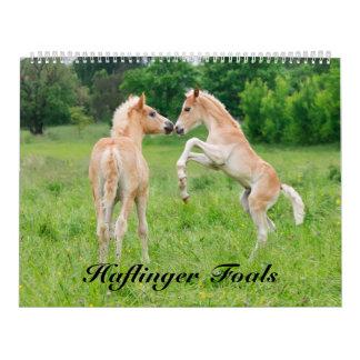 Haflinger pouline la taille 2017 grande calendrier