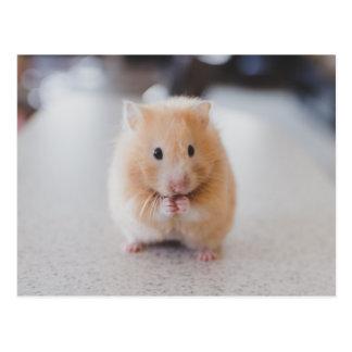 Hamster mignon carte postale