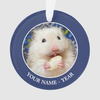 Hamster syrien pelucheux Kokolinka mangeant une