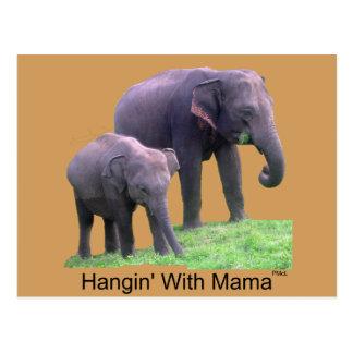 Hangin avec la maman, éléphants, carte postale