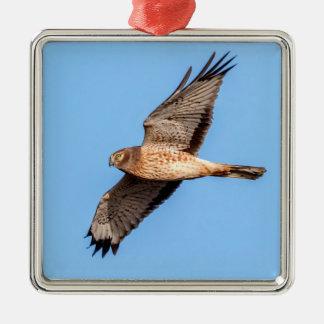 Harrier du nord en vol ornement carré argenté