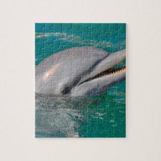 Haut étroit de dauphin puzzle
