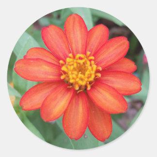 Heldere Oranje Zinnia om sticker, Ronde Sticker